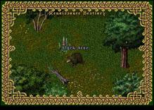 Ultima Online BlackBear