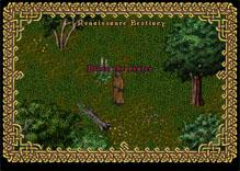 Ultima Online EvilHealer